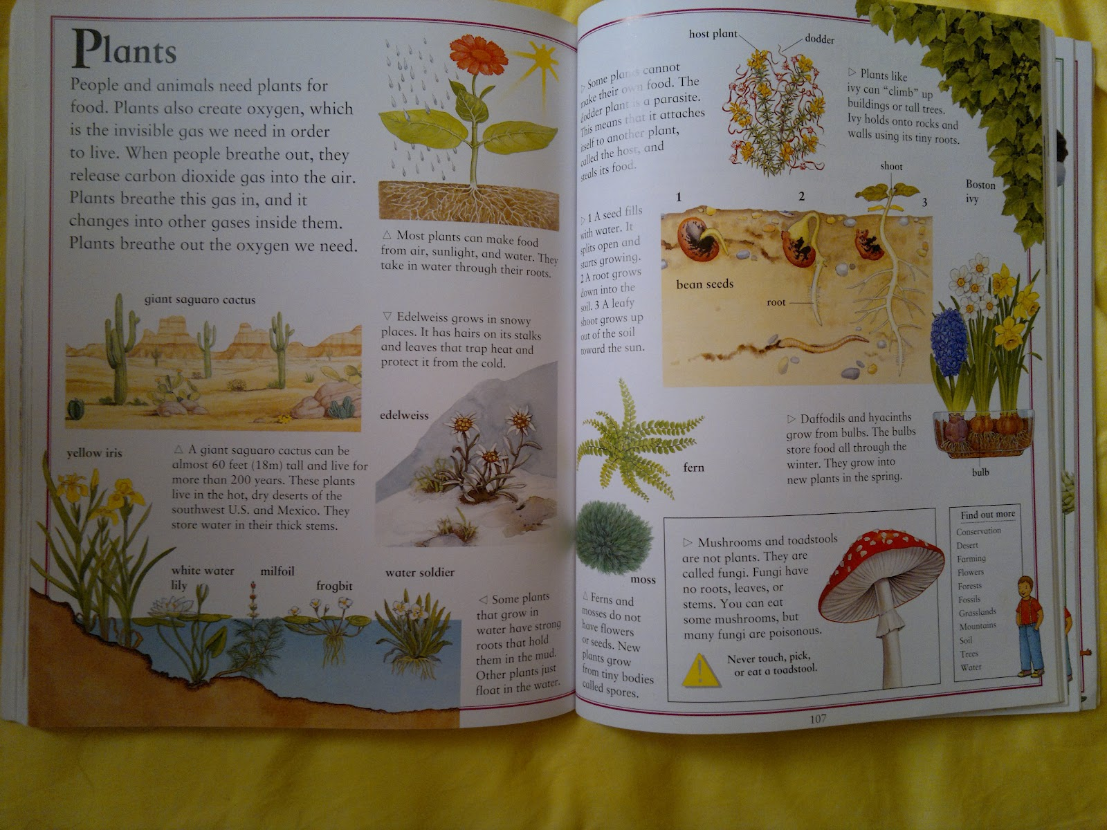 Umm Maimoonah S Journal All About Plants
