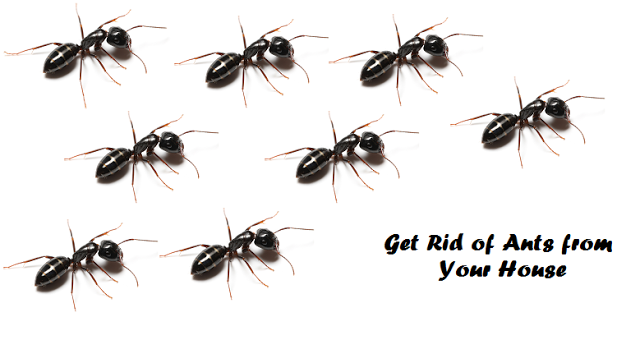 Other Tips for Getting Rid of Ants Natural remedy to get rid of carpenter ants How to get rid of ants naturally from your house