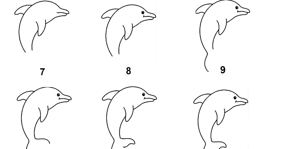 Menggambar Lumba Lumba Langkah Demi Langkah Berita Warta Tips Info