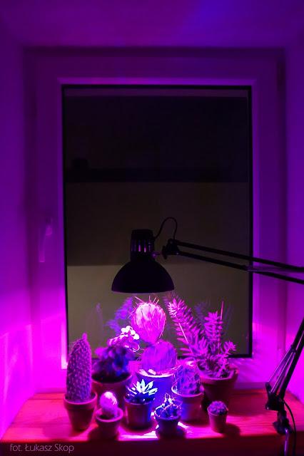 oświetlenie do kaktusów i sukulentów