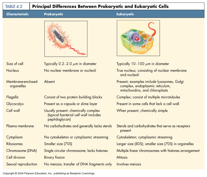 difference relating to eukaryotic and even prokaryotic organisms