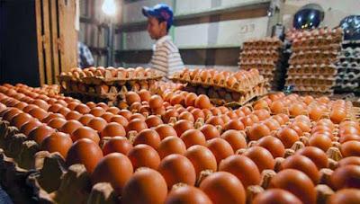 Harga Telur Ayam Ras Di Ambon Naik