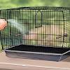 Cara Menghilangkan Bau Pada Sangkar Burung Kicau
