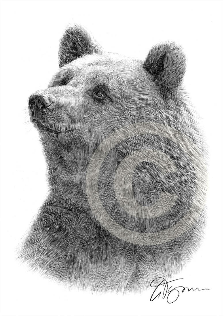 07-Grizzly-Bear-Gary-Tymon-Wildlife-and-Domestic-Animal-Pencil-Drawings-www-designstack-co