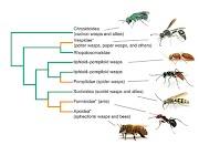 Piqûres d'insectes : moustique, guêpe ou abeille, tique...