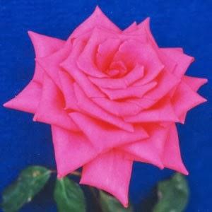 Fakta-Fakta Unik dan Menarik tentang Bunga Mawar