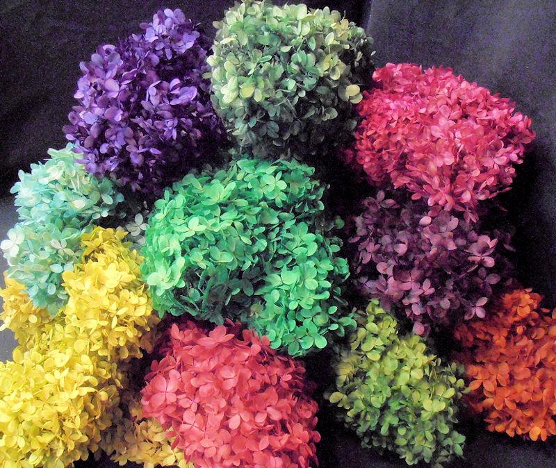 Hydrangea Flower: Flower Homes: Hydrangeas Flowers