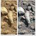 Mars : NASA Curiosity Photographed Fossil Finger On Mars ?