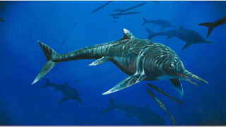 Spotlight : Rare 200 Million-Year-Old Ichthyosaur Species Discovered