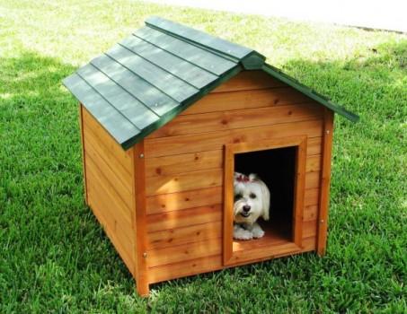 puppies  Tipos de Casas para seu Cãozinho