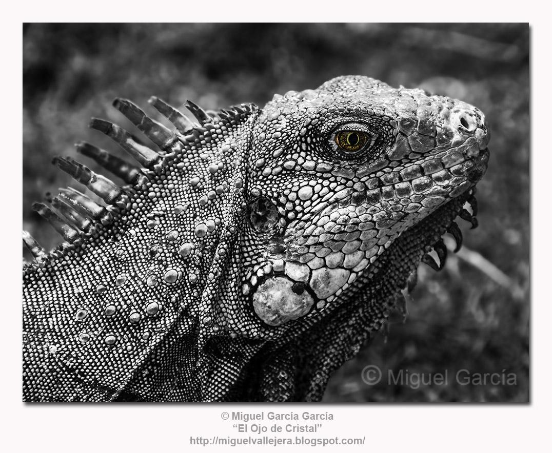 El Ojo de la Iguana.