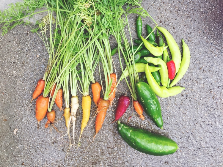 Summer Garden Veggies // Zone 6 & 7 Garden Tasks for August // www.thejoyblog.net