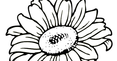 Mewarnai Gambar  Bunga  Matahari  Belajar Mewarnai Gambar