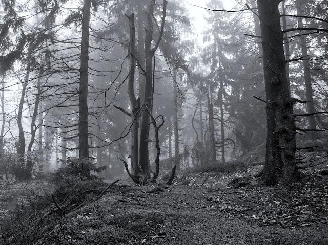 Zum Abschluss noch mal Nebelwald in Schwarzweiß