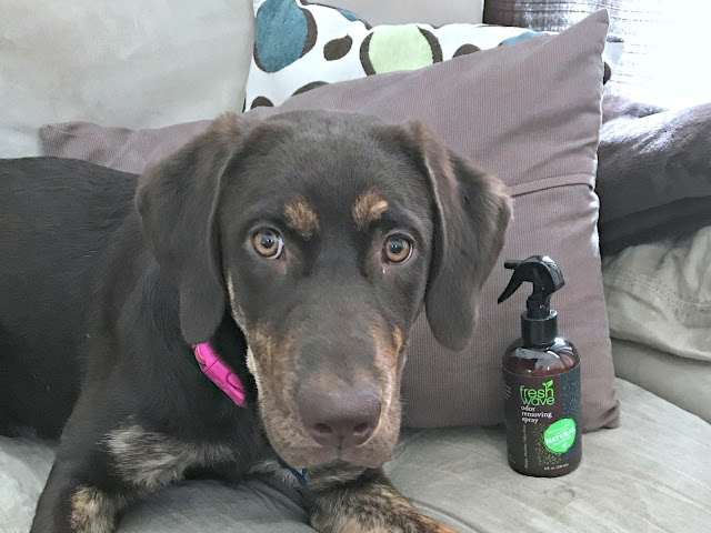 ideas to freshen home, how to naturally remove odors, how to naturally freshen up your house, affordable natural dog wash, tips to freshen up your home with a puppy