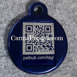 PetHub tag in Blue