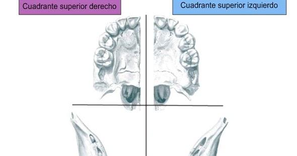 Anatomía dental: Sistemas de numeración (notación) dental.