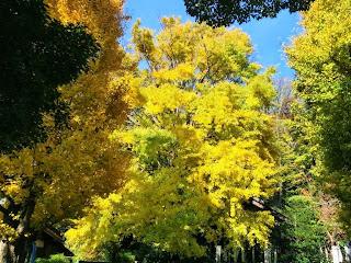 白旗神社の黄葉