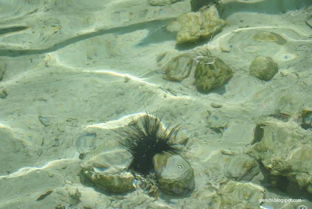 Big Lagoon El Nido Palawan Sea Urchin