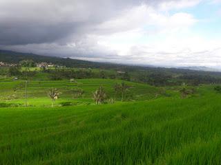 Obyek wisata Jatiluwih tabanan bali