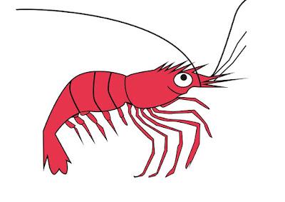 Camarão, camarón, frutos de mar, peixe, pescado