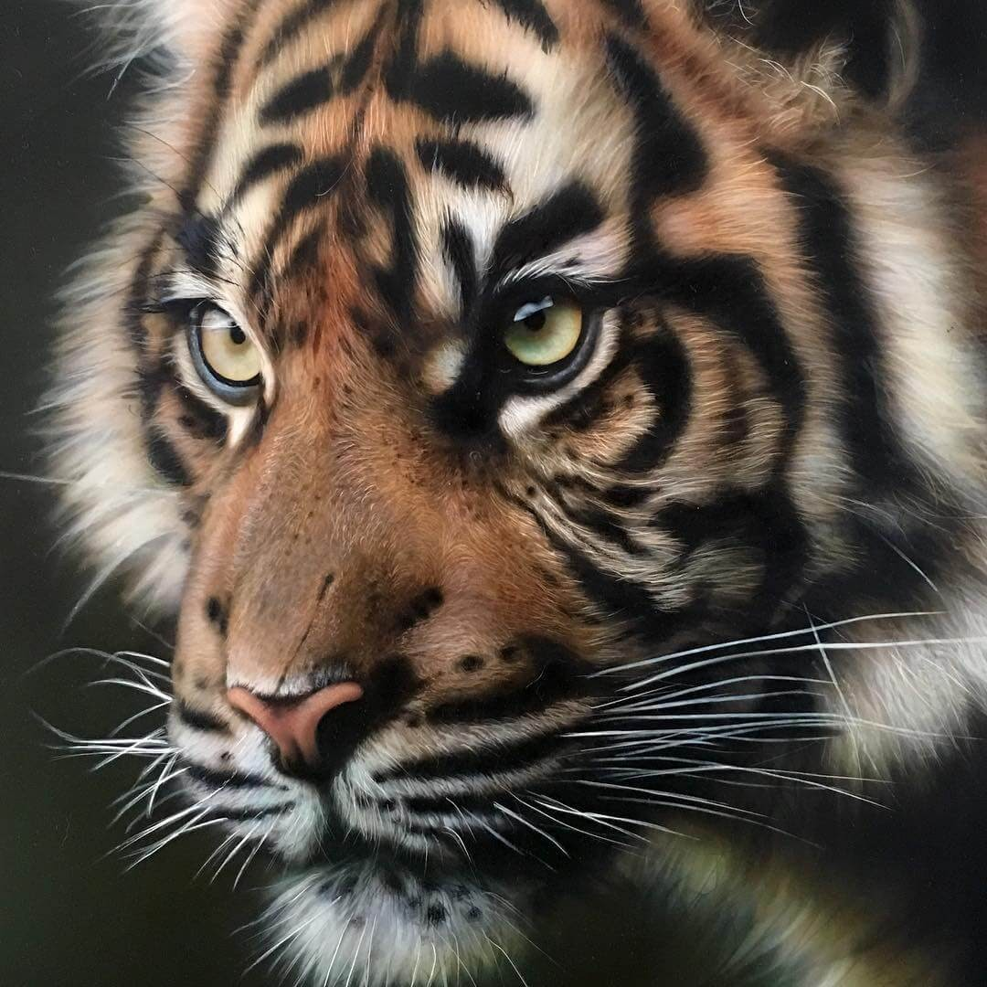 02-Tiger-M-Oosterlee-Realistic-Airbrush-Animal-Paintings-www-designstack-co