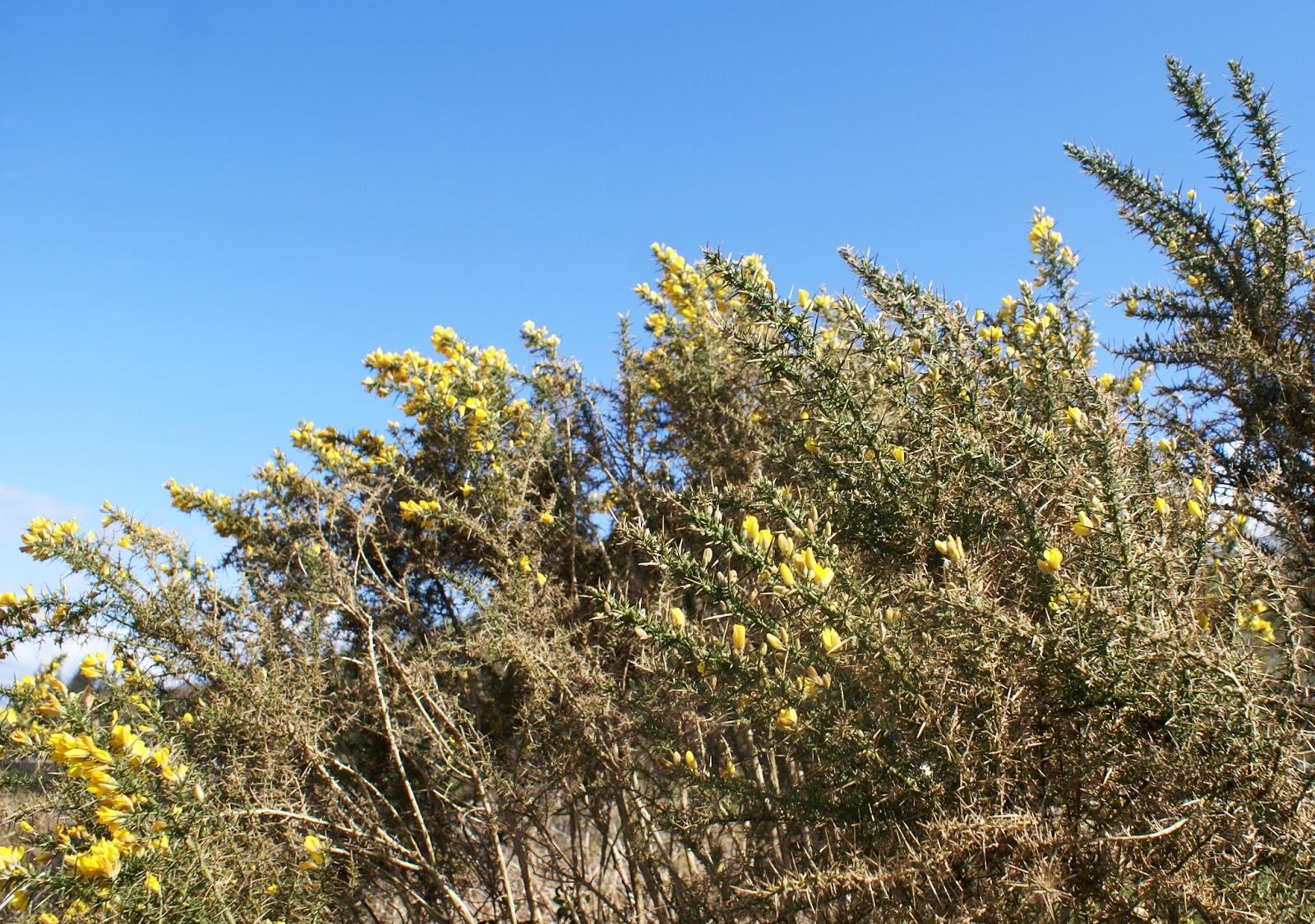 flowers loch linnhe highlands scotland united kingdom uk