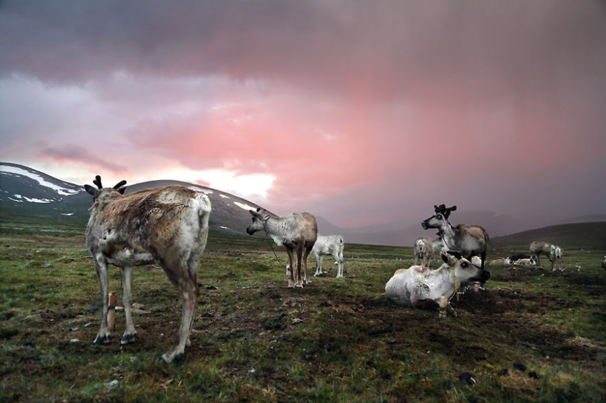Sunset on the camp - Meet The Tsaatan Nomads In Mongolia Who Live Like No One Else
