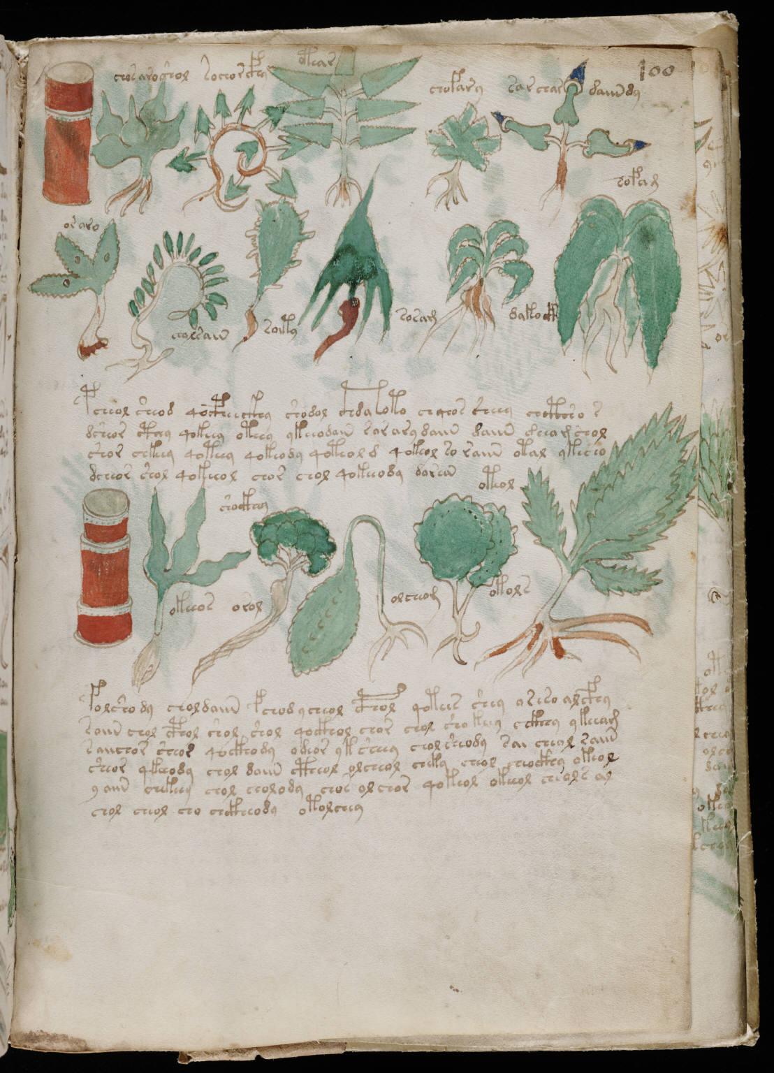manuscrito175