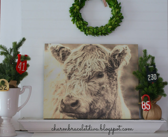 Farmhouse Scottish Highland cow tag wall art canvas