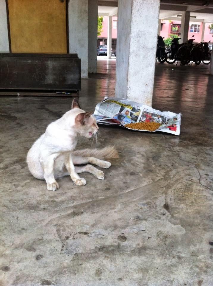 Gambar Kucing Jalanan godean.web.id