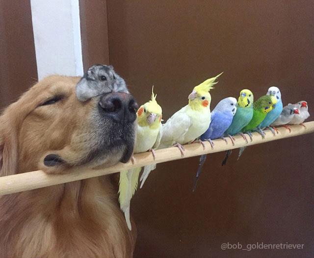 Adorable perro vive armoniosamente con 8 pájaros y un hámster