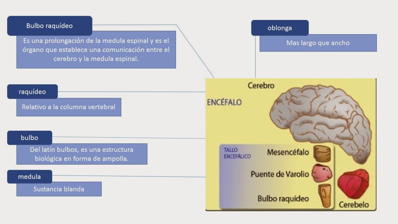 Fisiología Básica De Alejandra Sandoval 2014