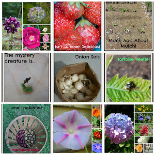 garden lessons insect plant science