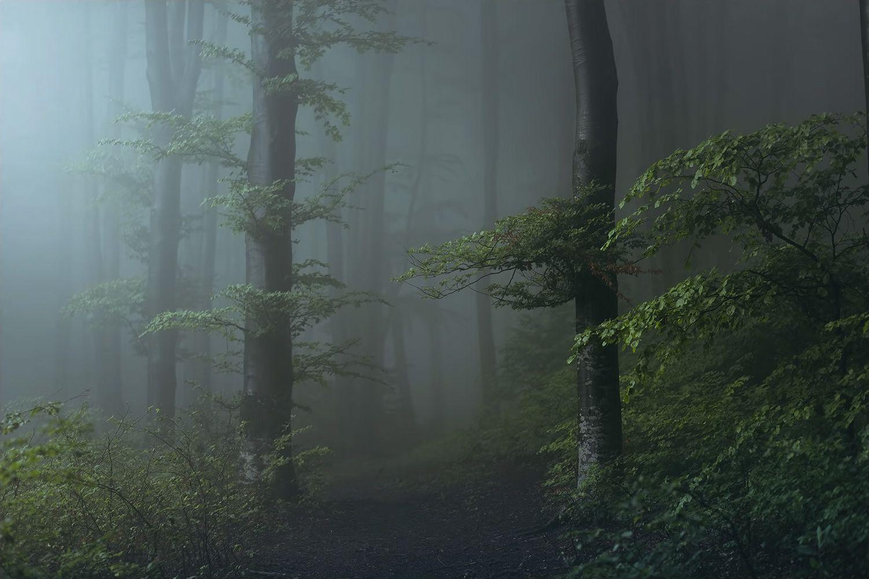 Туман в лесу, фотограф Тома Бончиу