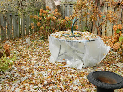 Greenwood-Coxwell Fall Garden Cleanup before by Toronto Paul Jung Gardening Services Pruning Annabelle Hydrangeas