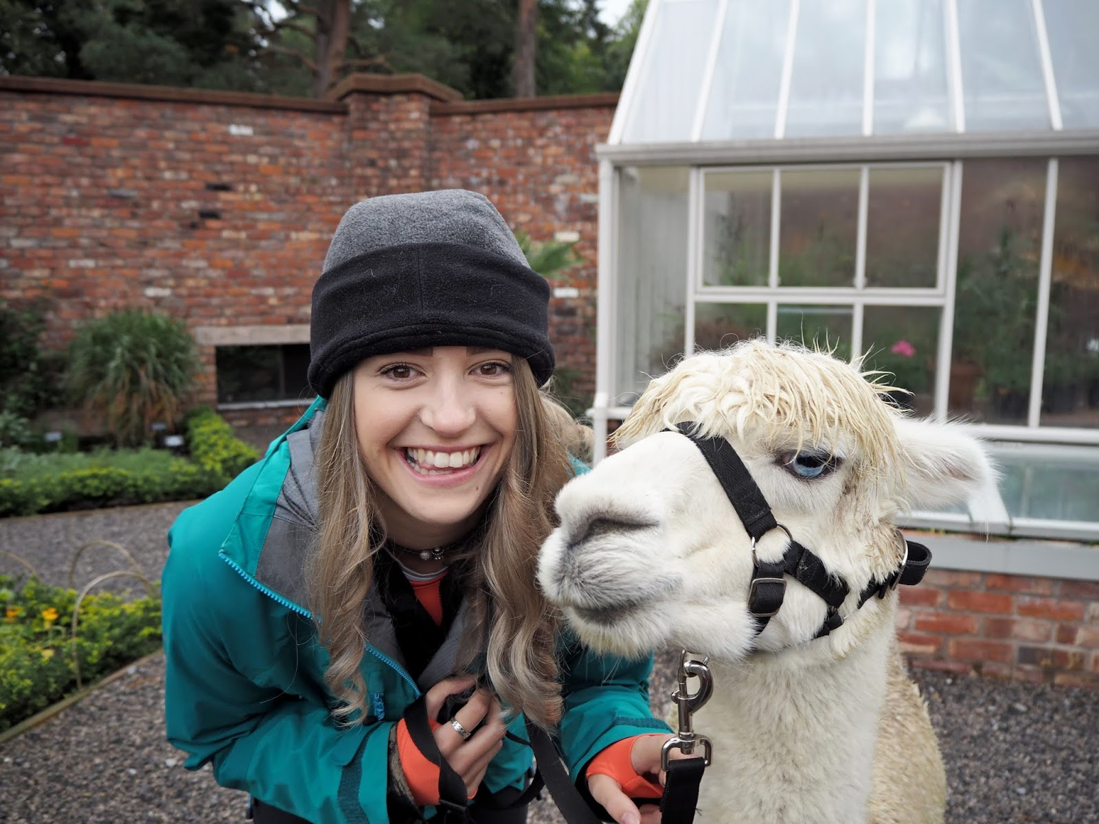 Girl with Alpaca