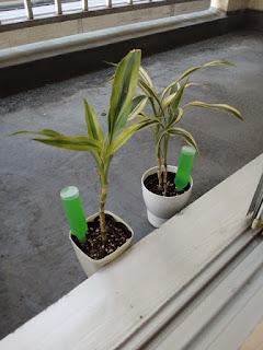 植物の写真3