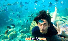 Under Water Wisata Pulau Pari