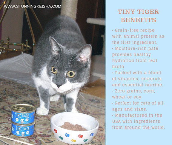 Feed Your Inner Tiny Tiger #ChewyInfluencer