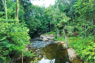 Hutan kayu lapis indonesia