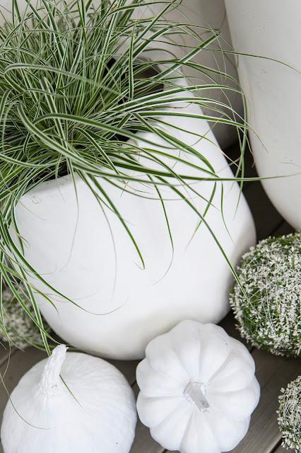 Inspirasjon til høstplanter i krukker - del 2 Furulunden Sprayfarget gresskar i hvitt.