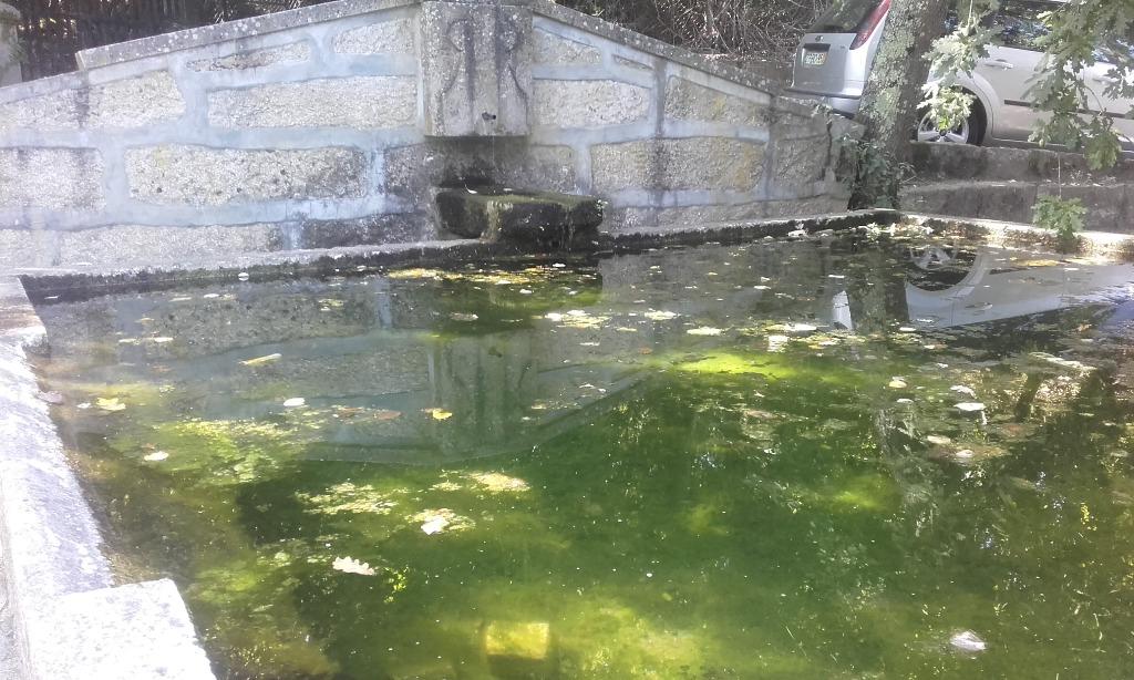 Poço com água verde