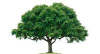 Pertemuan di Bawah Pohon