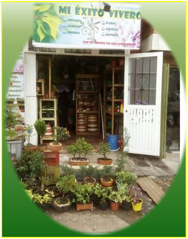 Mi xito vivero jardineria for Viveros frutales bogota