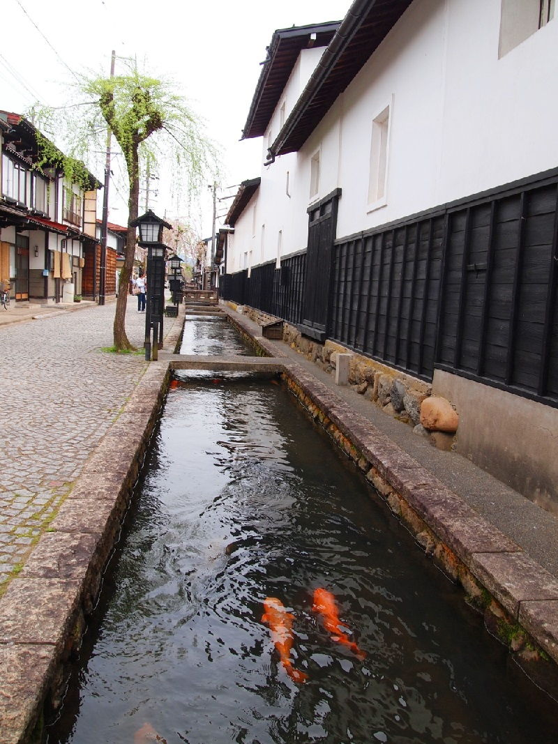 Gambar Ikan Koi Jepang Berenang Selaras Di Kanal Hida-Furokawa
