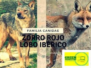 Animales, plataforma de contenidos de ECO SEO Green Marketing
