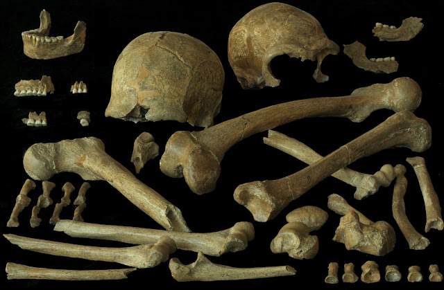 New study finds evidence of Neanderthal cannibalism and mobile modern humans driving mammoths to extinction
