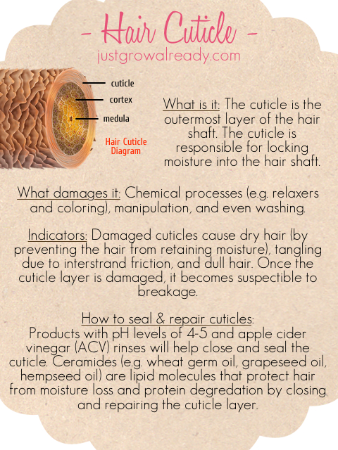 Picture It: Hair Cuticle | Just Grow Already!
