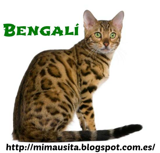 bengalí tirando